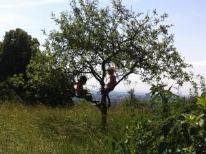 2015 Klettern 2mädelsapfelbaum